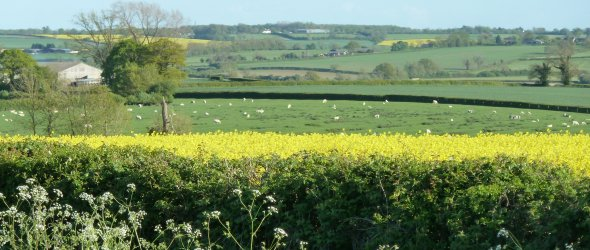 Image: Fields towards Weston